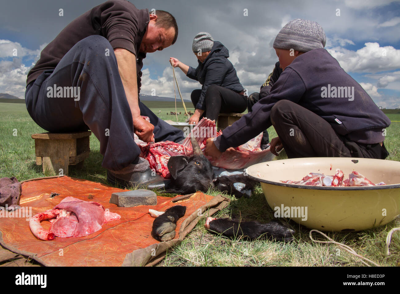 Kyrgyzstan - Nomads family cutting a goat during Ramadan  for eating at night when fasting all day - lake Song Kol - Stock Image