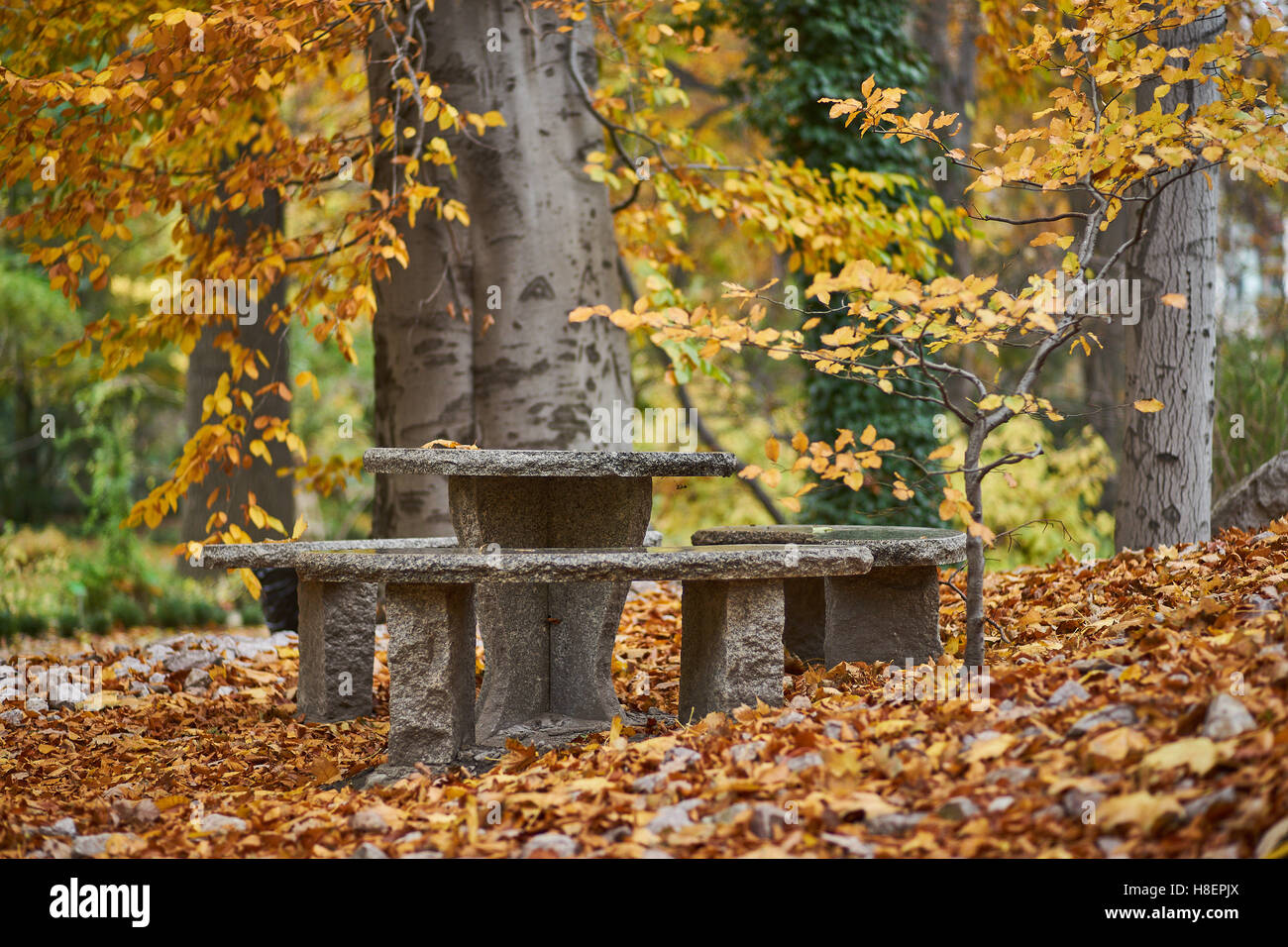 Autumn silence emptiness loneliness Botanical gardens at fall Wroclaw Stock Photo