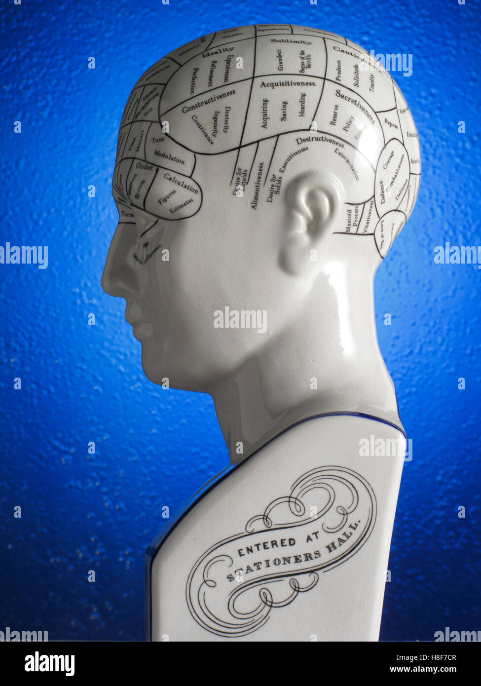 Anatomical model of the head, labelled, brain functions - Stock Image