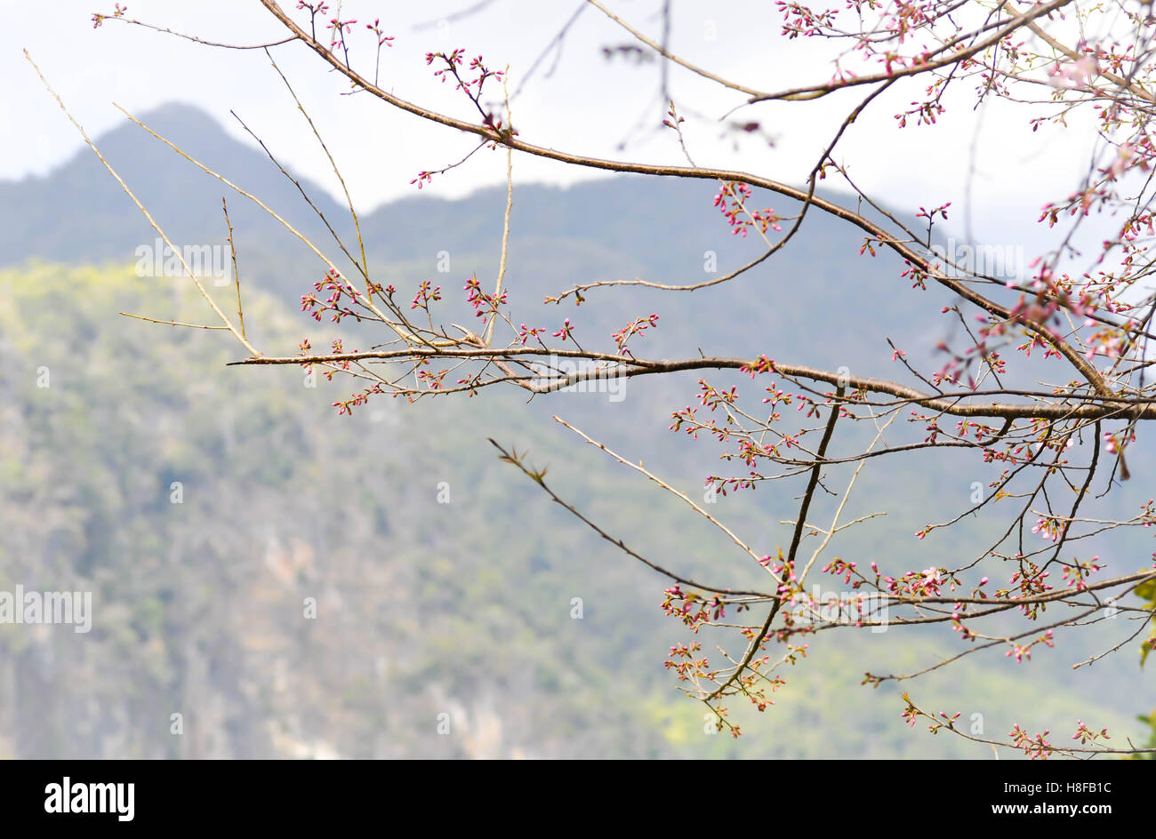 Himalayan Flora Stock Photos Amp Himalayan Flora Stock
