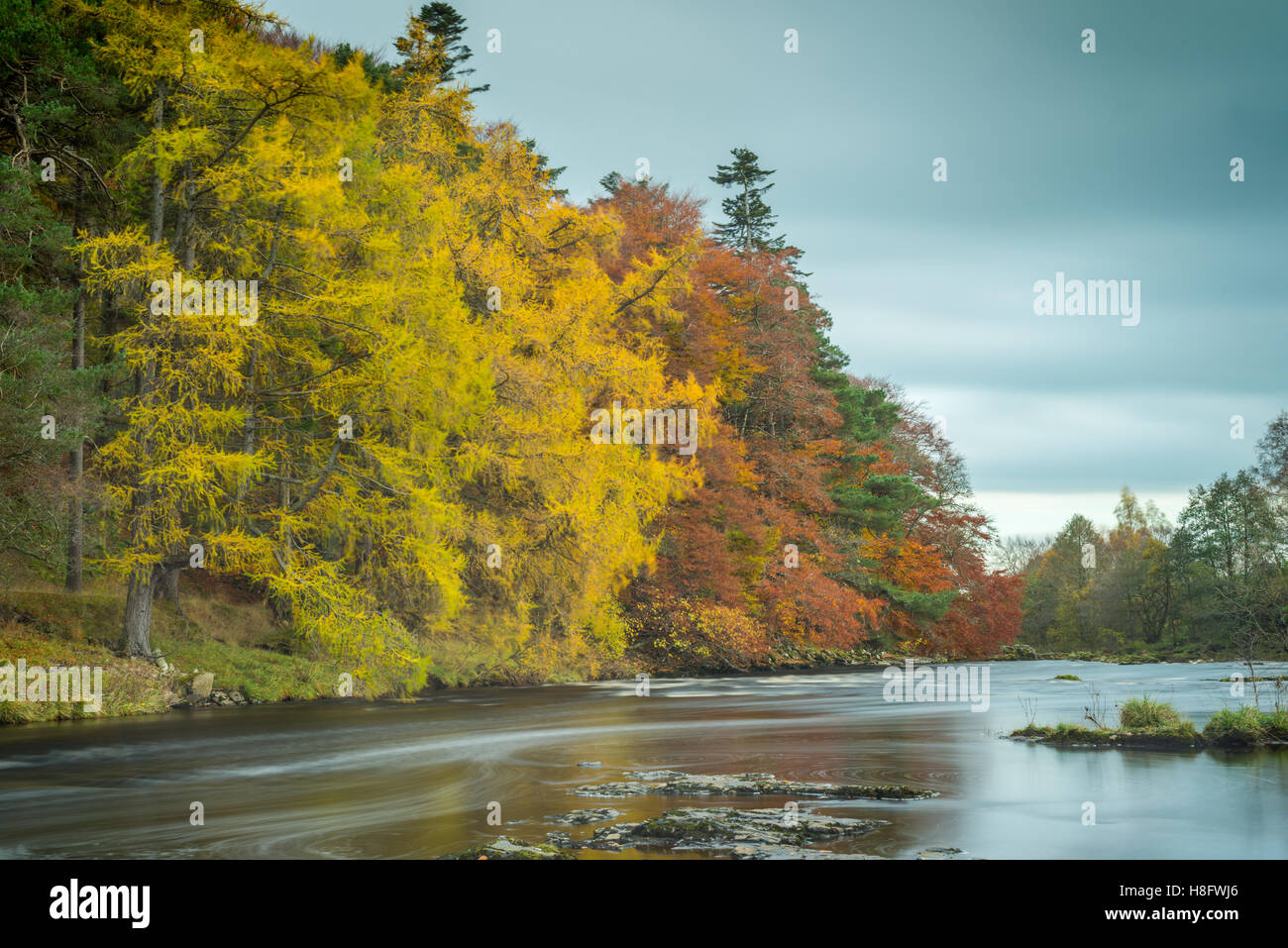 The River Tees in Autumn - Stock Image