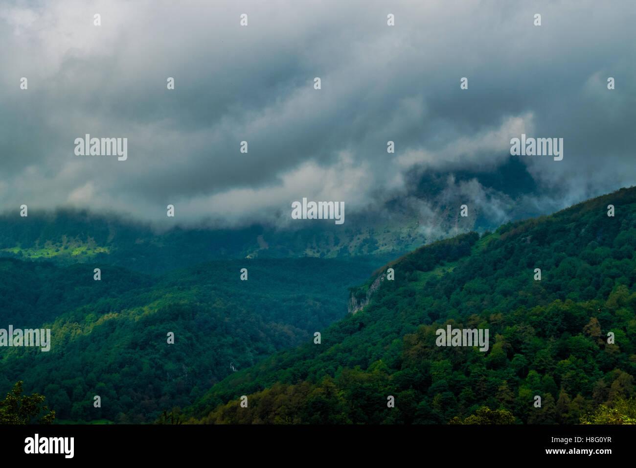 latoon jungles - Stock Image