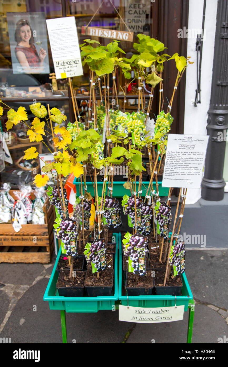 Moselle valley, city of Bernkastel-Kues, Germany, grapevines for sale, as souvenirs, - Stock Image