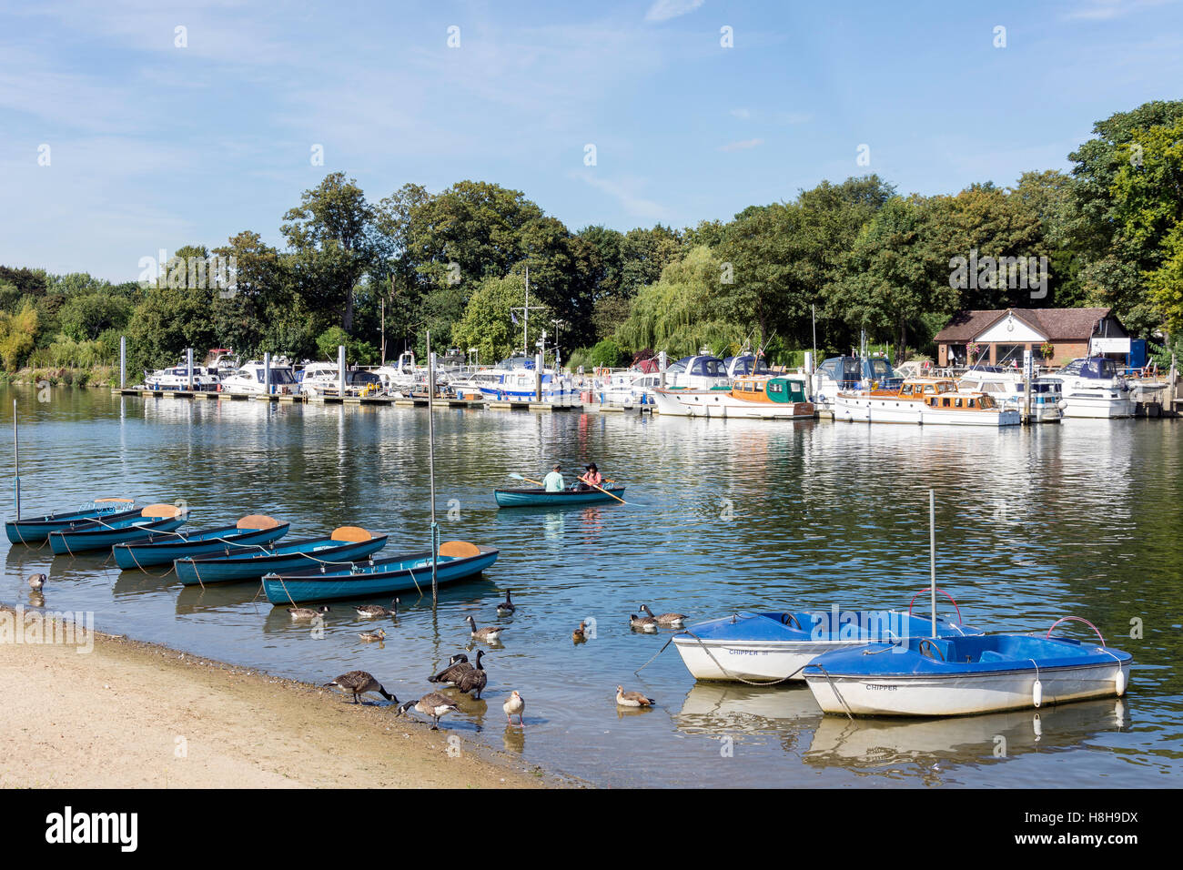 Rowing boats on River Thames from East Molesey, Surrey, England, United Kingdom - Stock Image