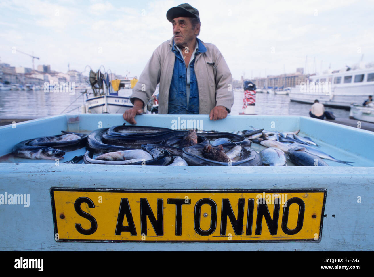Fish monger at the port, fish, fish market, old port, Marseille, Provence, France, Europe - Stock Image