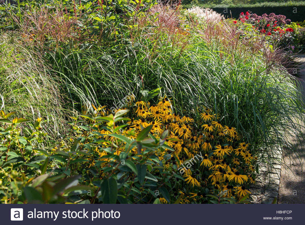 Planting Of Late Summer Flowering Perennials Grasses And Shrubs In
