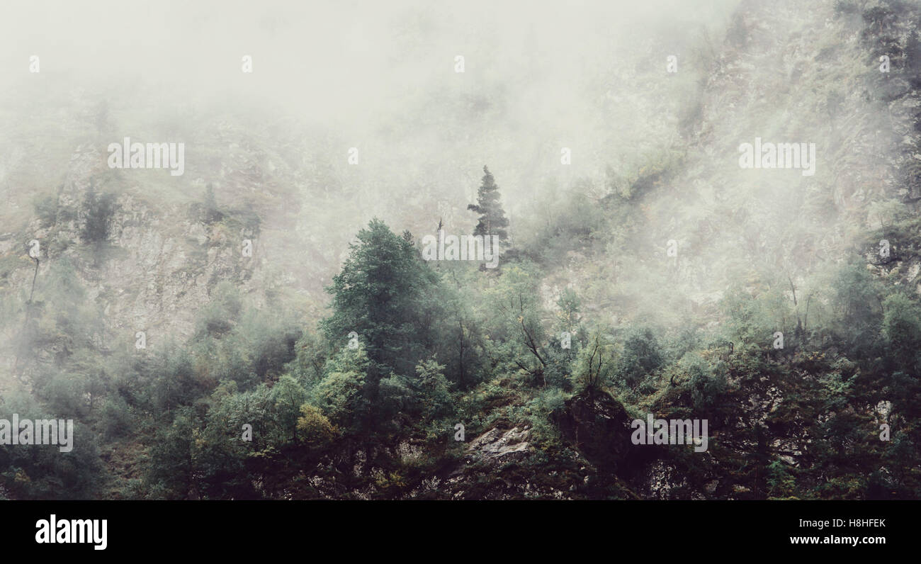 Nature mystical landscape. Fog covers the forest. - Stock Image