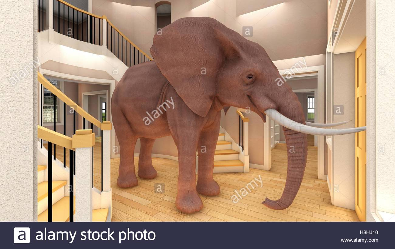 elephant in the living room 3d rendering - The Elephant In The Living Room