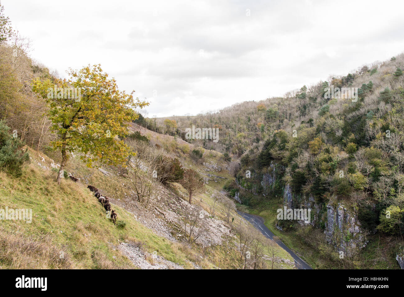Steep terrain stock photos steep terrain stock images - Cheddar gorge hotels with swimming pools ...