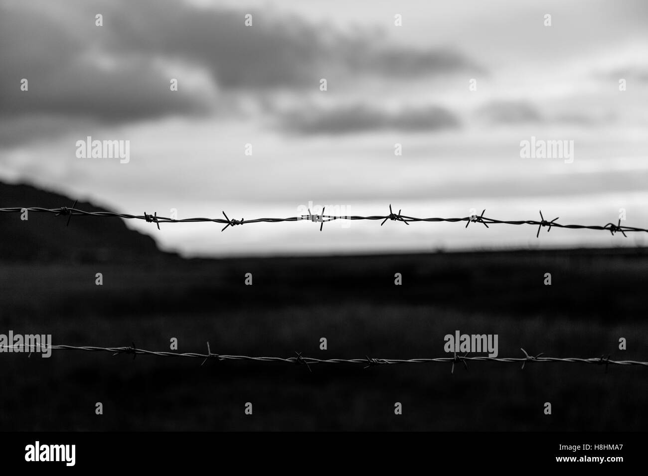 Barbed wire fence in Iceland - Stock Image