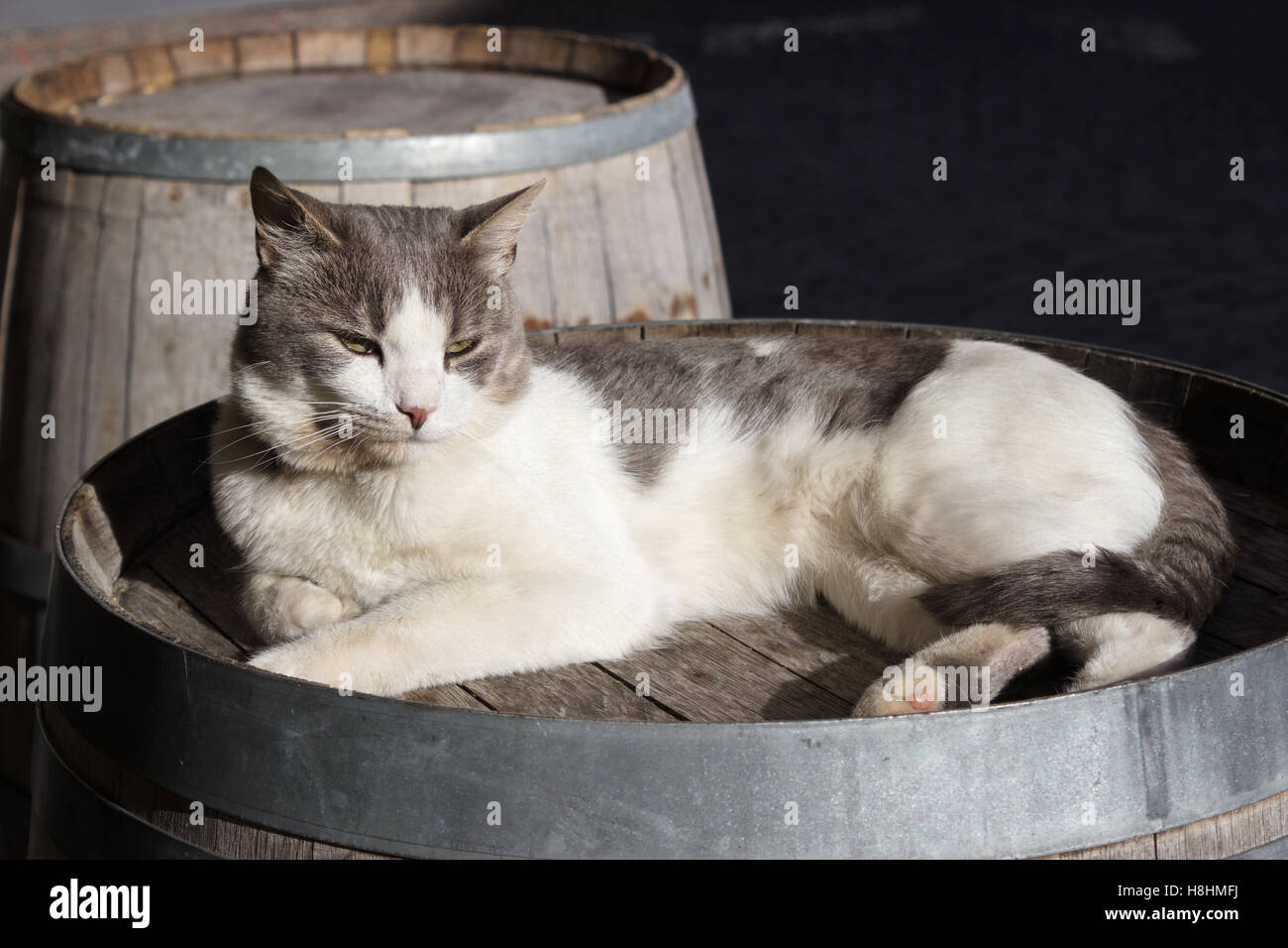 Cat snooze on a old barrel - Stock Image