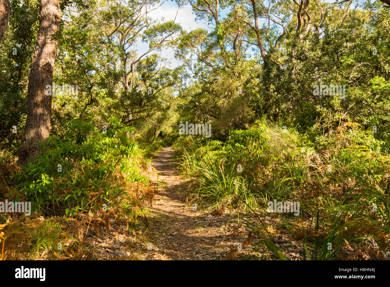 A narrow sandy path through native vegetation leads to an Australian beach on the New South Wales south coast - Stock Image