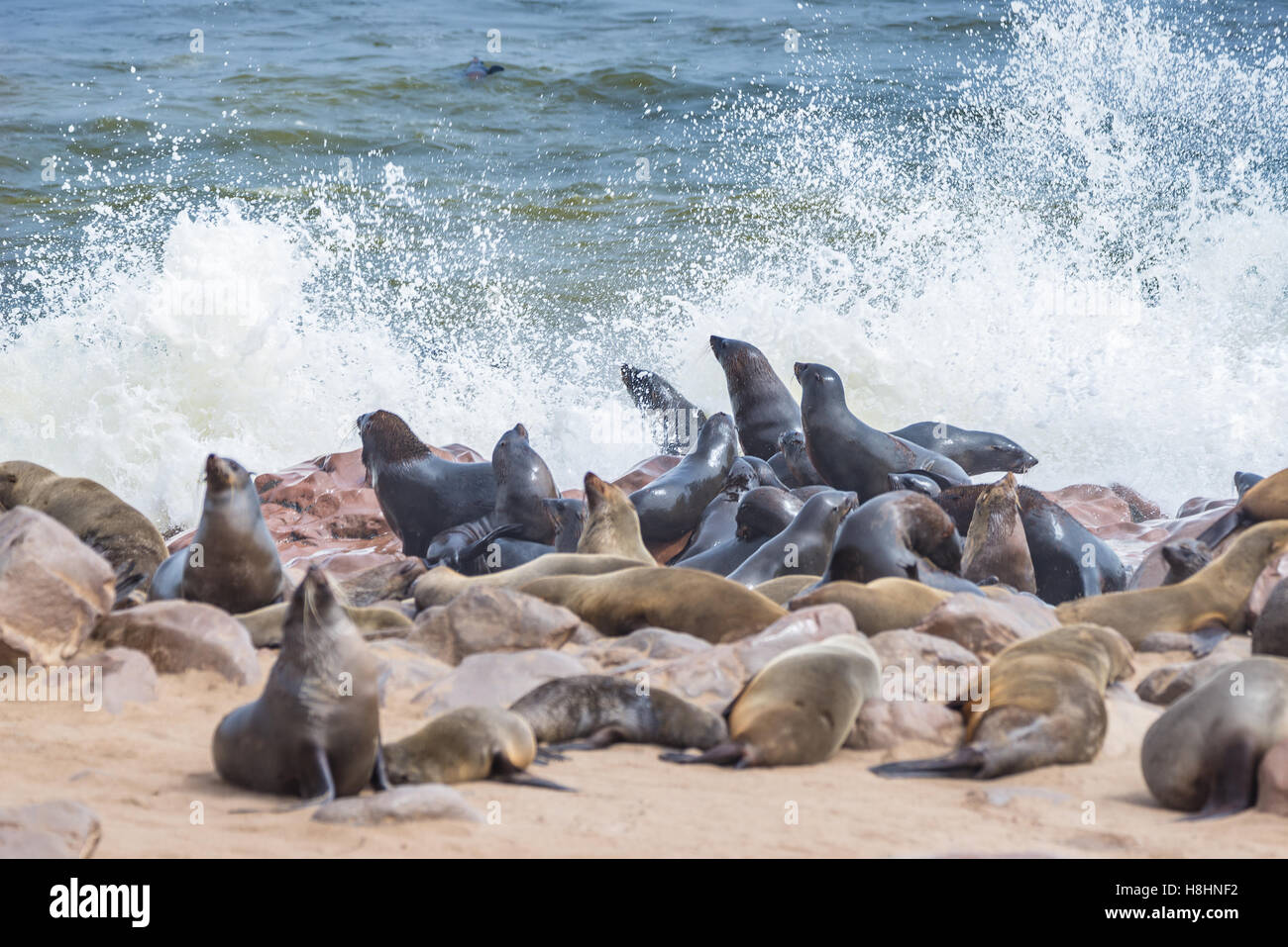 The seal colony at Cape Cross, on the atlantic coast of Namibia, Africa. View on the shoreline and the rough waving - Stock Image