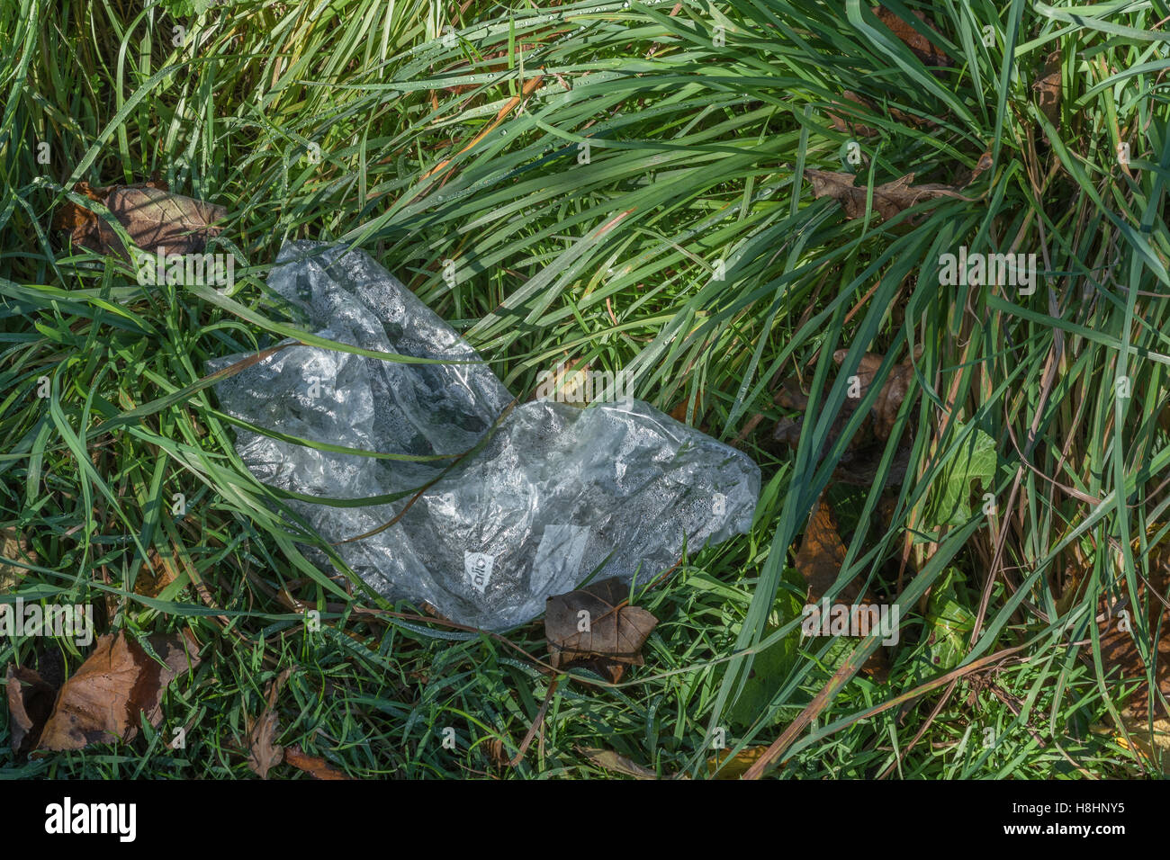 Discarded polythene / plastic bag seen in a country hedgerow. Plastic waste, war on plastic concept. Metaphor environmental - Stock Image