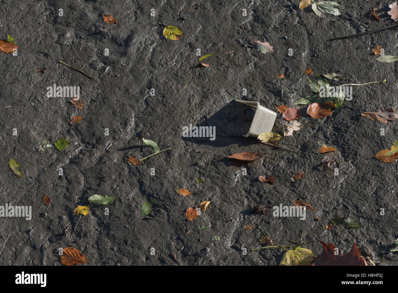 Discarded plastic container embedded in the muddy bed of an estuarine river [River Fowey] - Stock Image