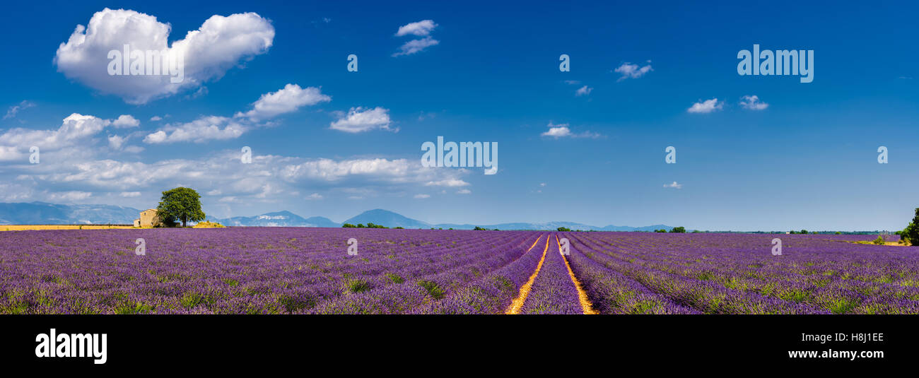 Summer in Valensole with lavender fields, stone house and heart-shaped cloud. Alpes de Hautes Provence,  France - Stock Image