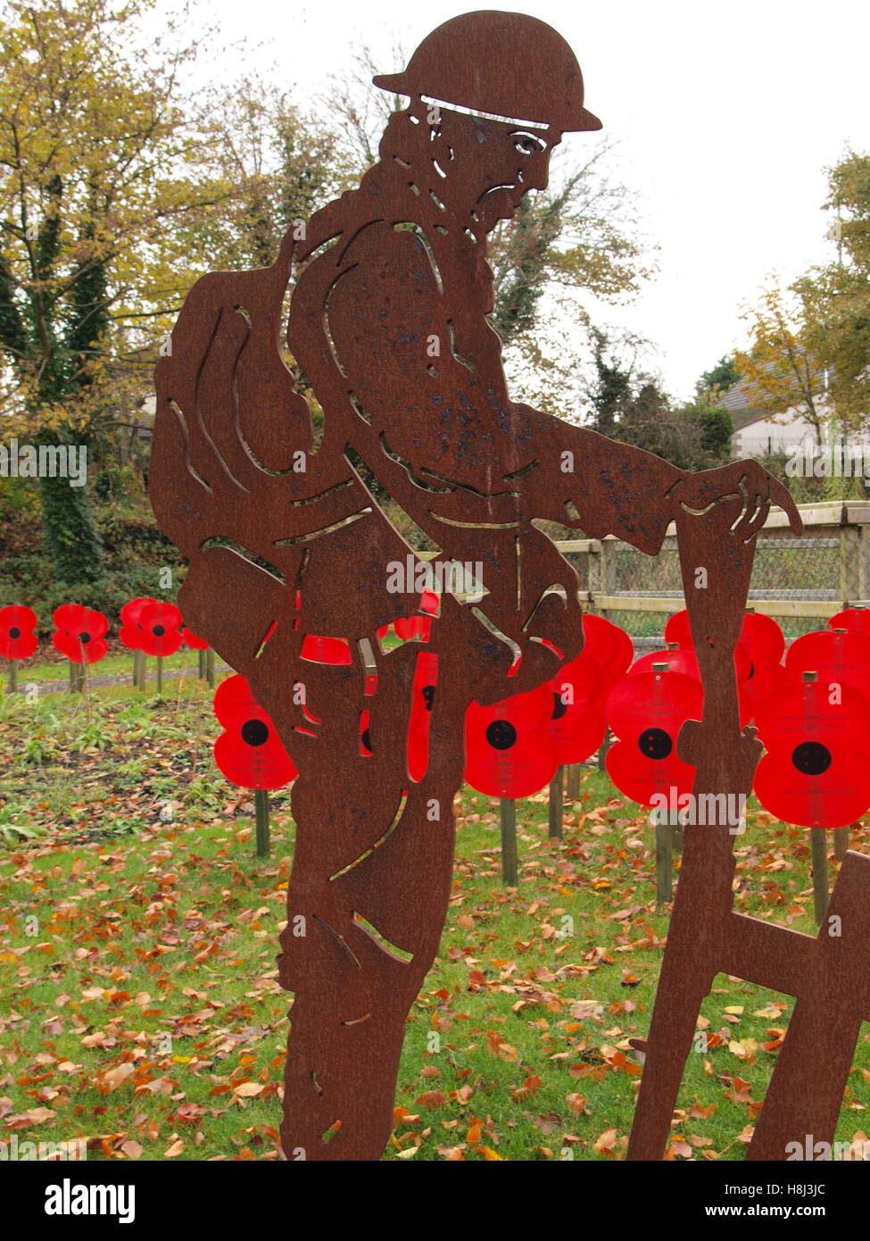 Somme Remembrance Poppy Day World War - Stock Image