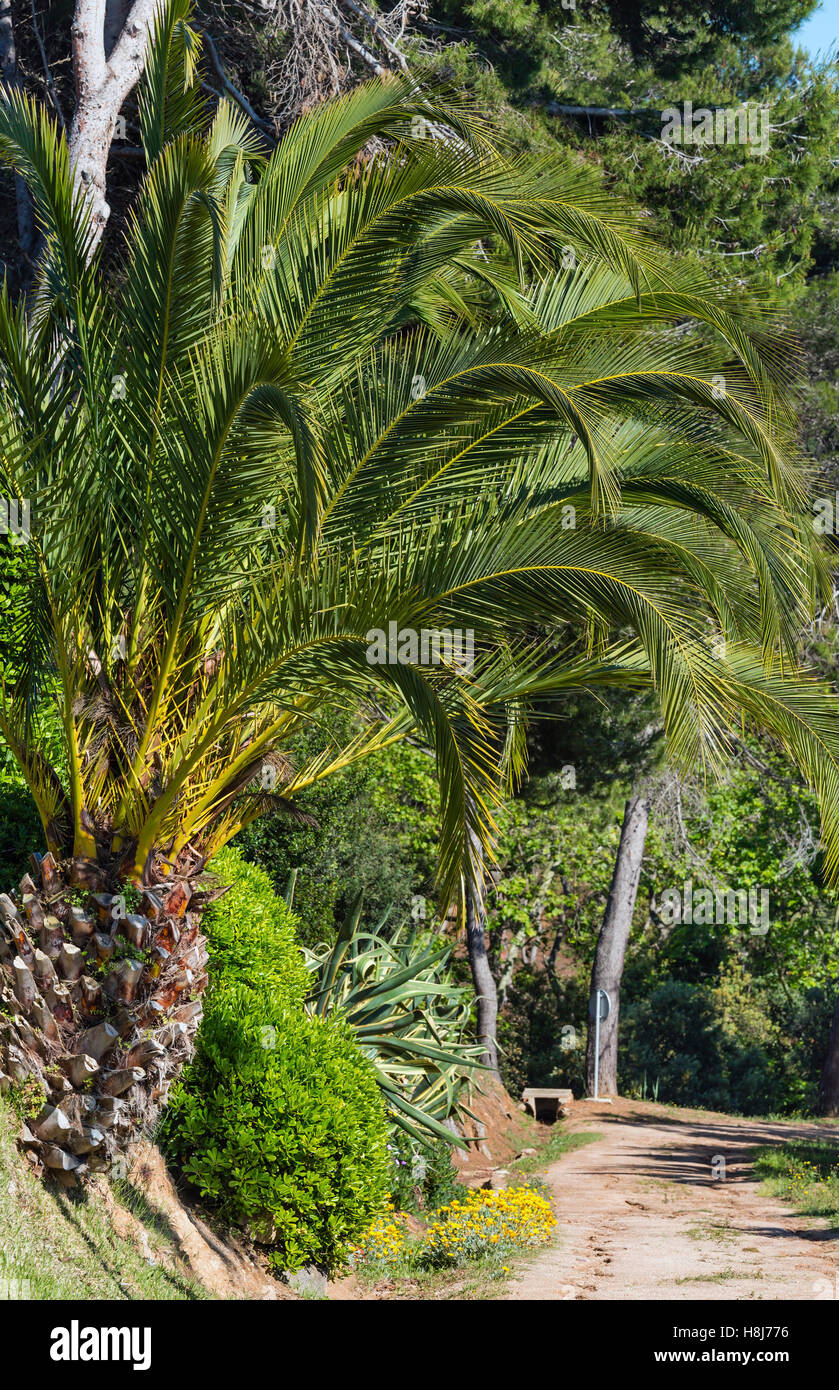 Blossoming palm tree yellow flowers stock photos blossoming palm palm trees and yellow flowers in nature park stock image mightylinksfo Gallery