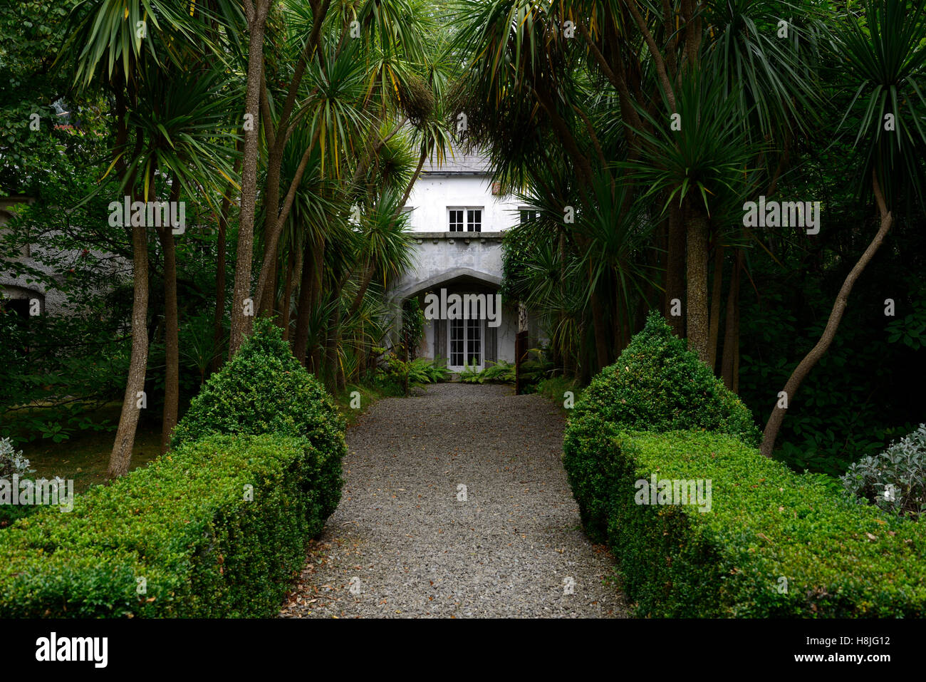 Box hedge topiary parterre clipped neat hedging garden design formal Corke Lodge Bray Wicklow Ireland RM Floral - Stock Image
