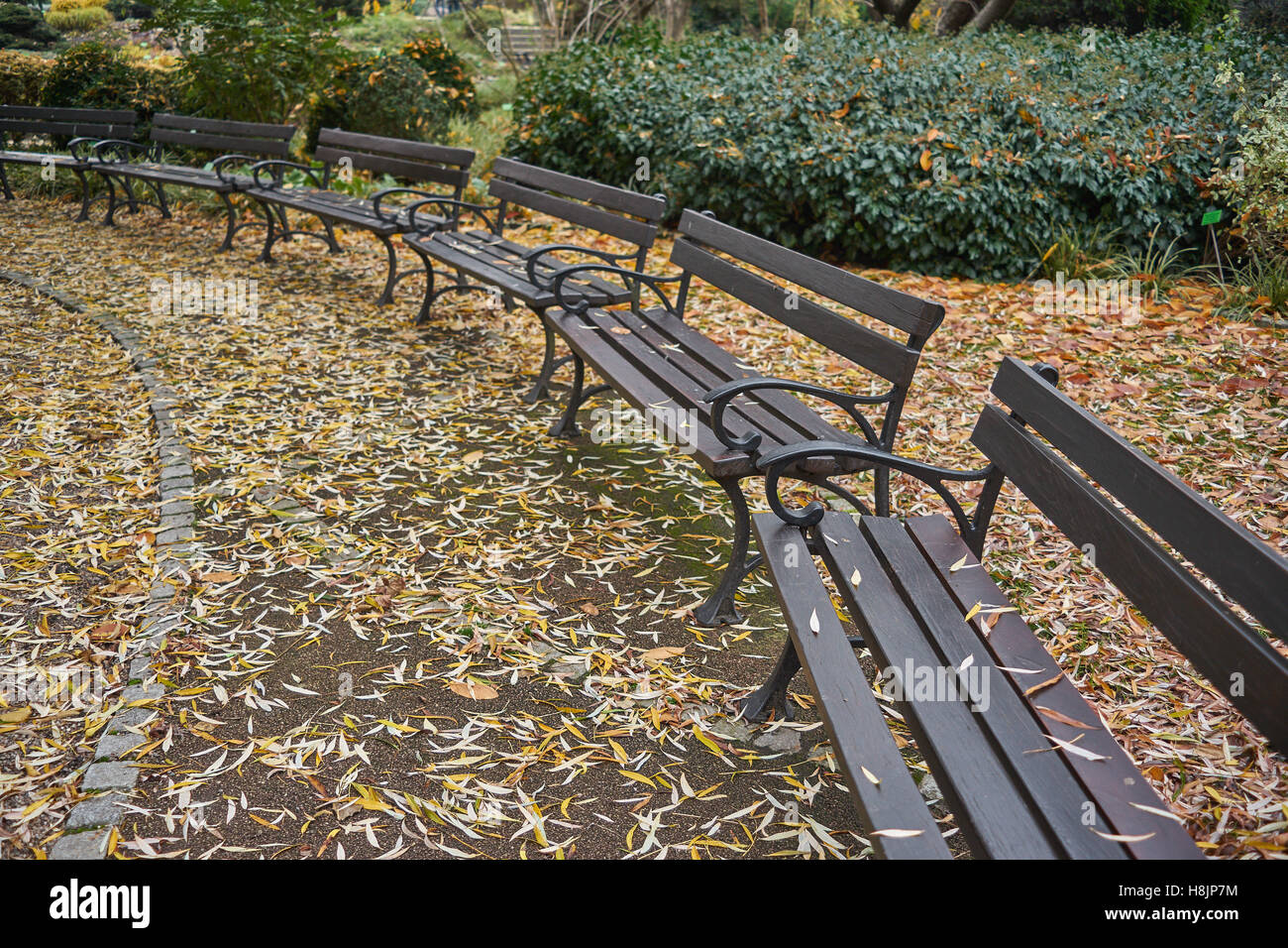 Empty benches among fallen autumn leaves nostalgia - Stock Image