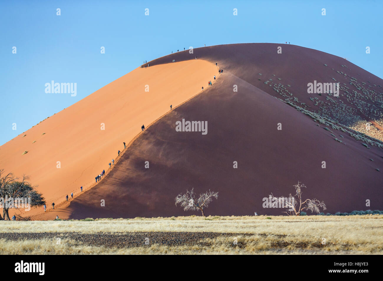 Hikers climbing the renowned dune 45 in Namibia - Stock Image