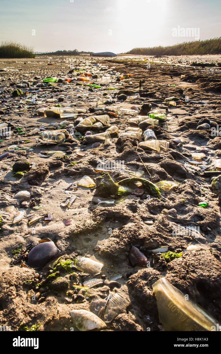 Glass bottles covering beach in Brooklyn New York City Dead Horse Bay landfill - Stock Image