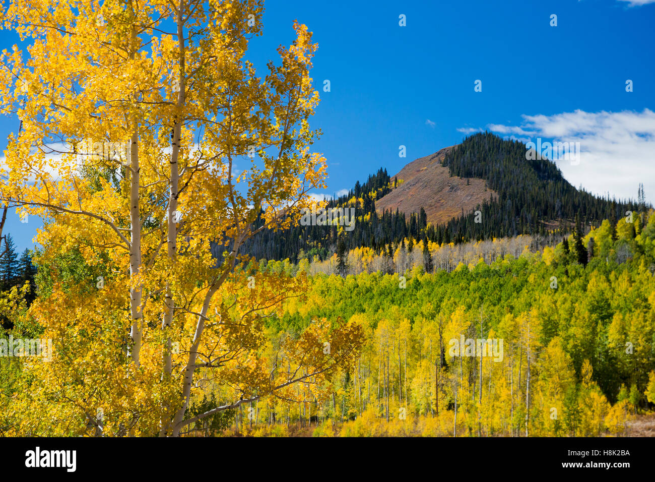 Steamboat Springs, Colorado - Fall colors in the Rocky Mountains at Muddy Pass on the Continental Divide. - Stock Image