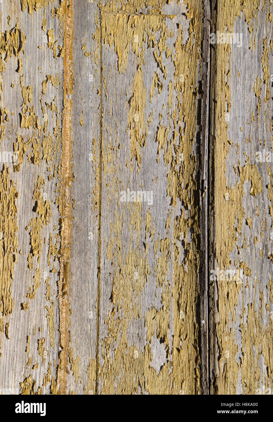 Close up of a panel from a weathered vintage screen door that has yellowed peeling varnish and bare wood, in natural - Stock Image