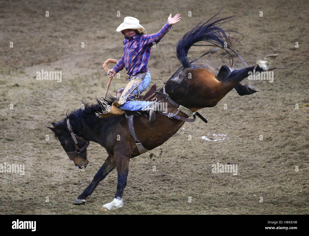 Toronto, Canada. 13th Nov, 2016. Cowboy Peter Hallman of Canada competes during the Rodeo section of the 2016 Royal - Stock Image