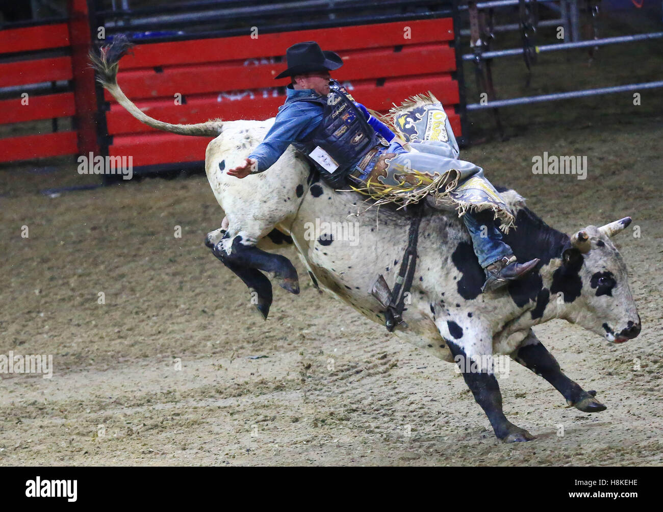 Toronto, Canada. 13th Nov, 2016. Cowboy Adam Hinkley of Australia competes during the Rodeo section of the 2016 - Stock Image