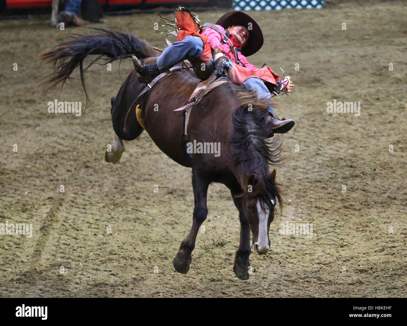 Toronto, Canada. 13th Nov, 2016. A cowboy competes during the Rodeo section of the 2016 Royal Horse Show in Toronto, - Stock Image