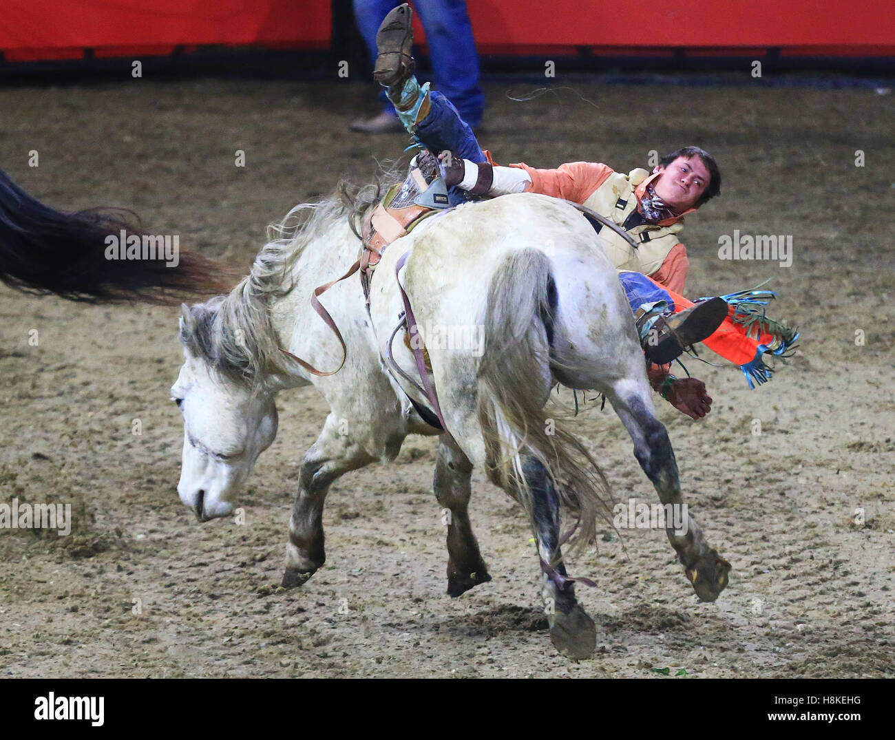 Toronto, Canada. 13th Nov, 2016. Cowboy Tanner Phillips of the United States falls from his horse during the Rodeo - Stock Image