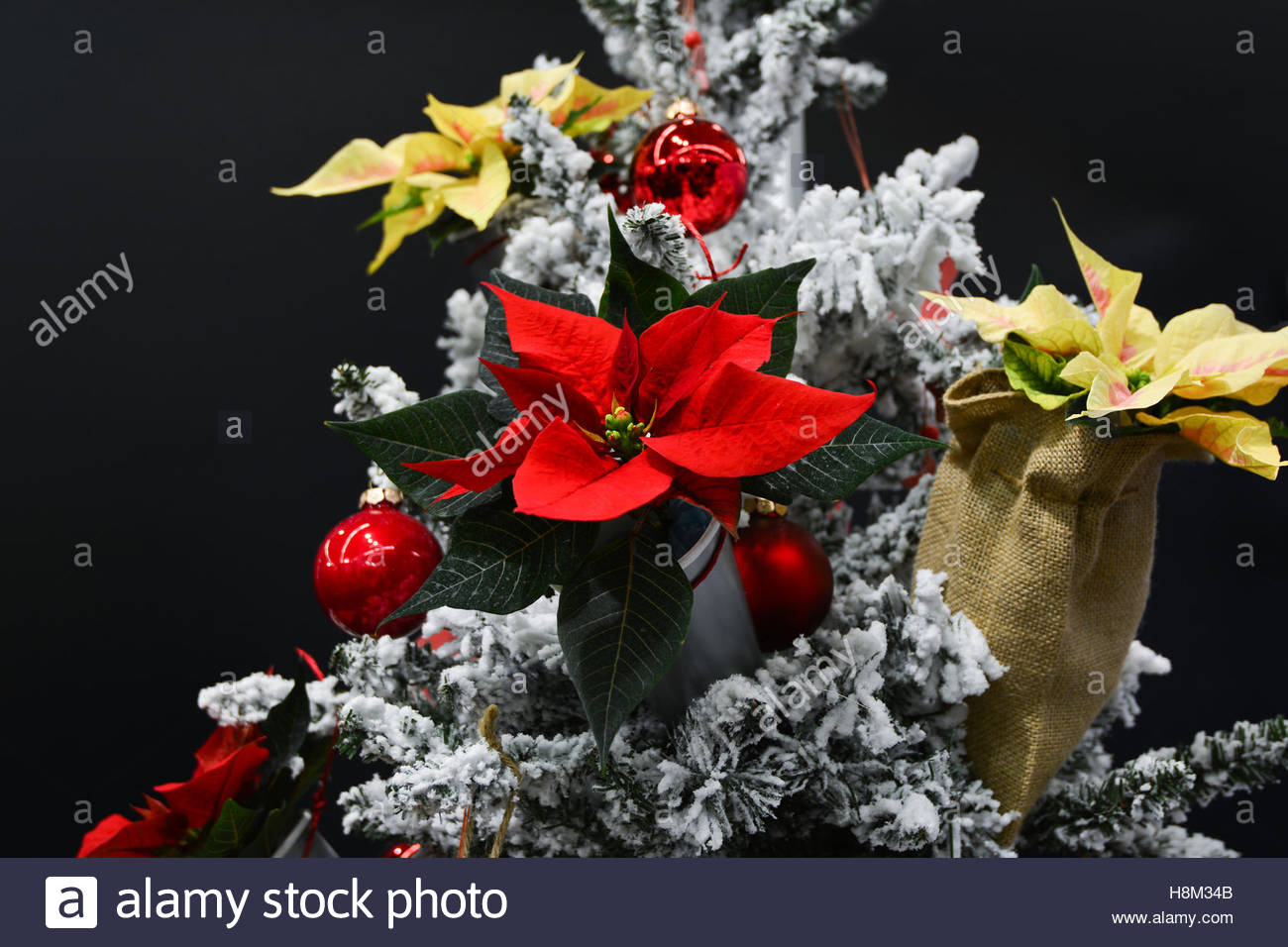 christmas tree decoration decorated with euphorbia pulcherrima poinsettias