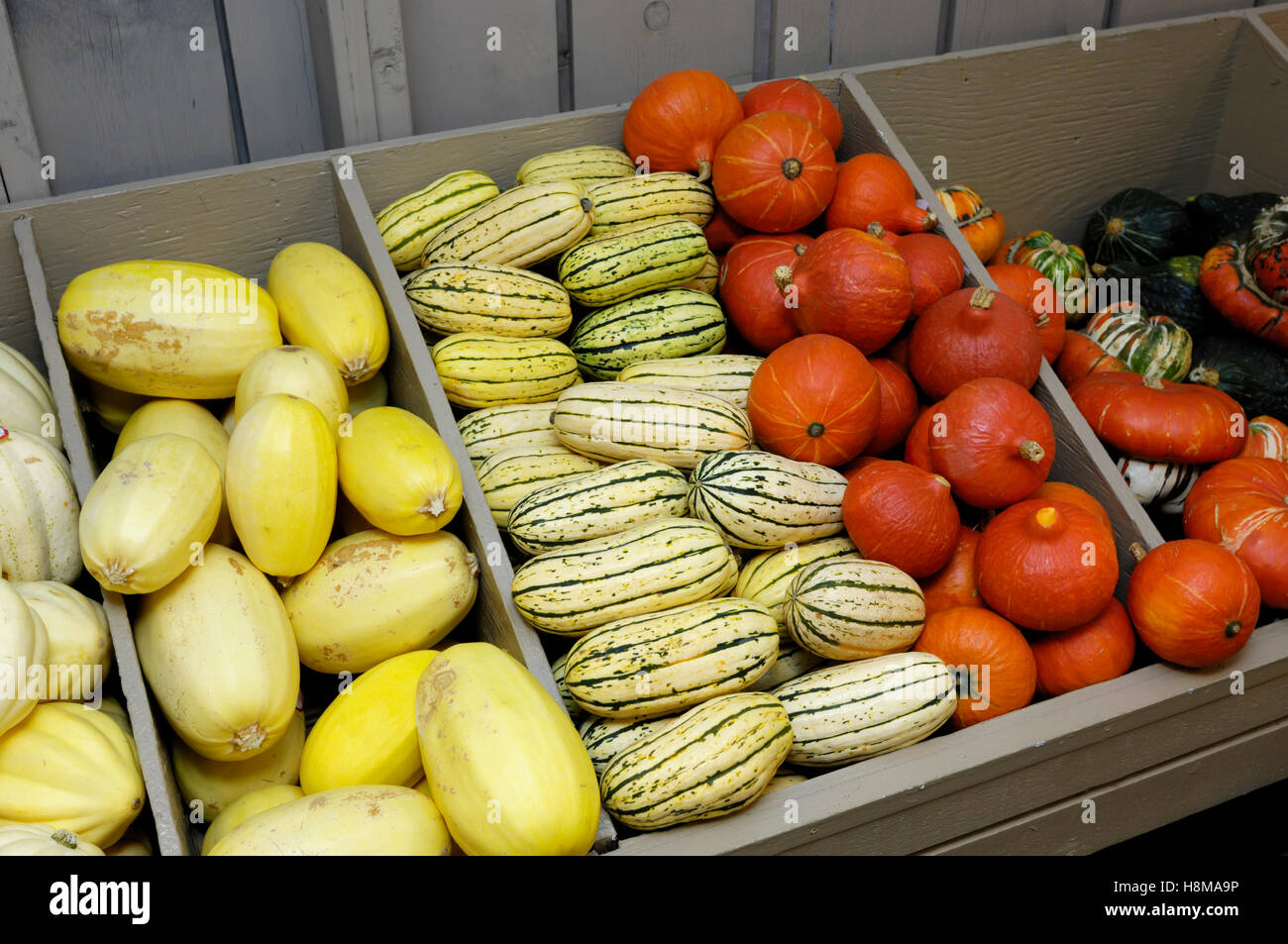 Different sorts of squash on farm market stall, Red Kuri, Sweet Potato squash, Spaghetti squash, Turban squash, Stock Photo