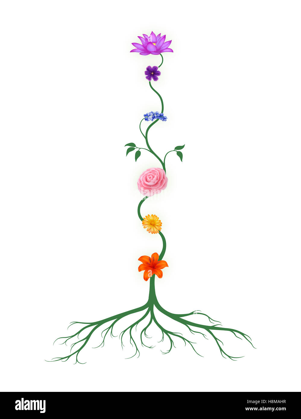 Chakra symbols represented as associated with chakras flowers and colors growing from a root chakra - Stock Image