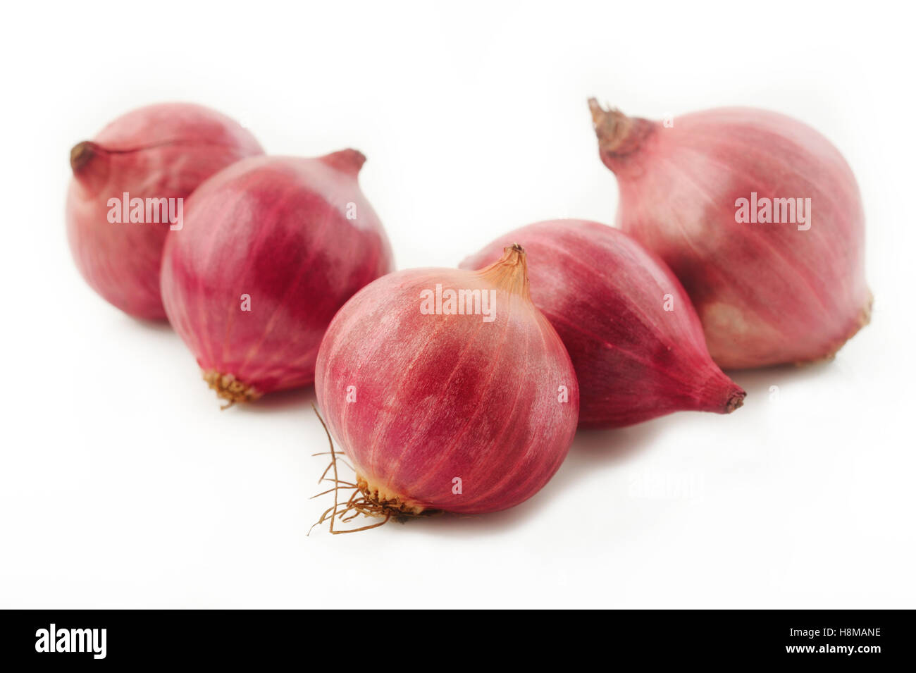 shallot onion isolated on white background - Stock Image