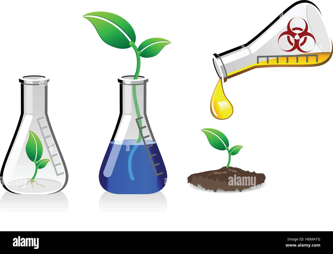 Plants being grown in glass beakers, genetically modified organism in the food industry - Stock Image