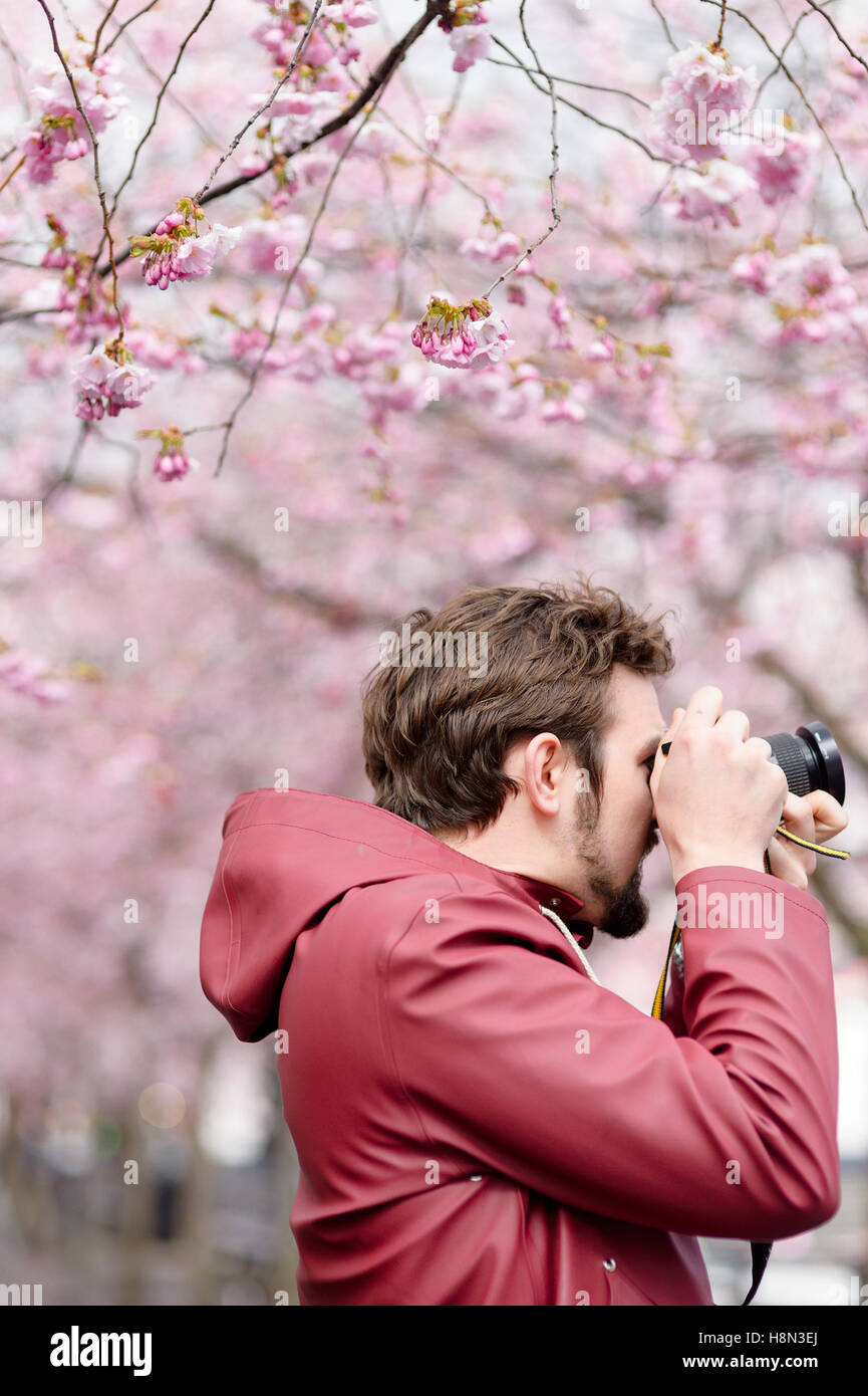 Young man taking pictures under blooming trees - Stock Image
