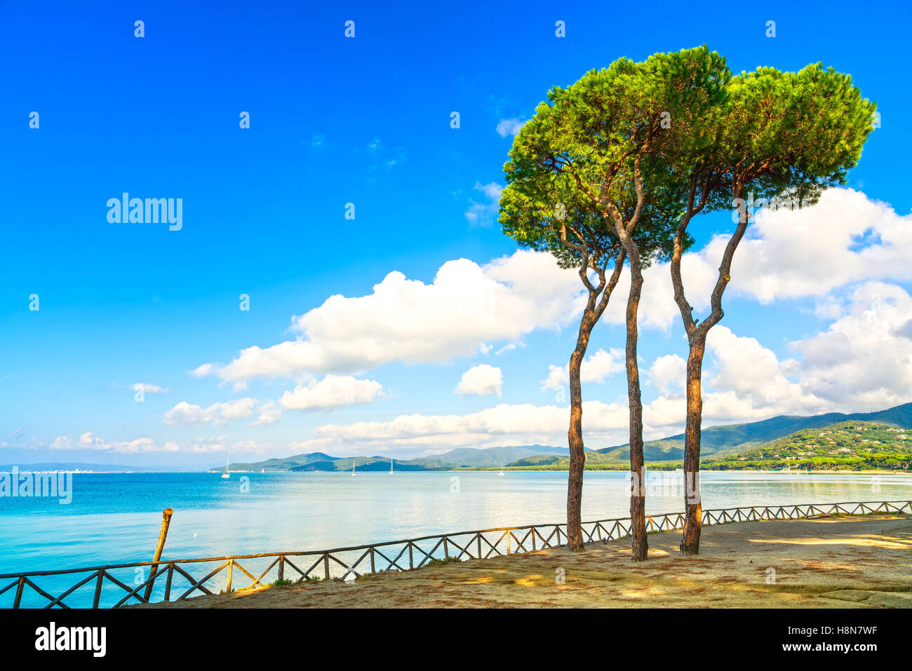 Pine tree group on the beach and sea bay background. Punta Ala, Tuscany, Italy - Stock Image