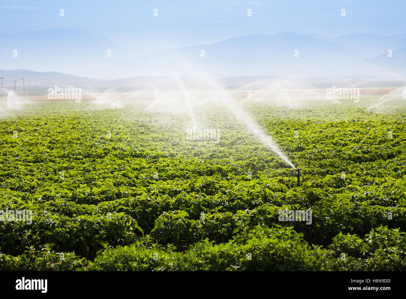 Fields being irrigated - Stock Image