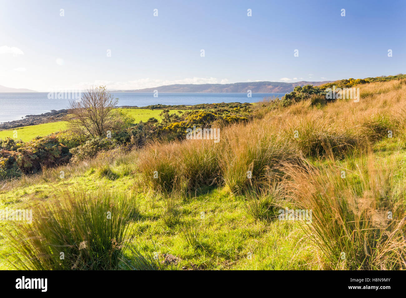 Scottish landscape scenic with vibrant grass field with sea and hills in the background  Model Release: No.  Property Stock Photo