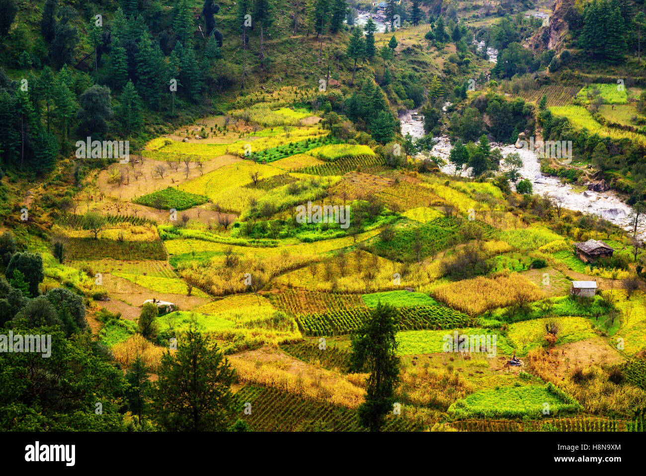 Traditional agriculture groung in Himalayas - Stock Image