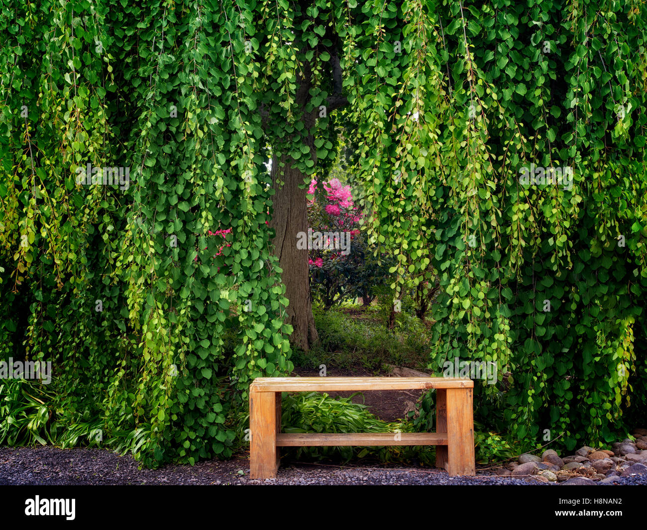 Tree and bench with rhododendron. Oregon Garden, Oregon - Stock Image