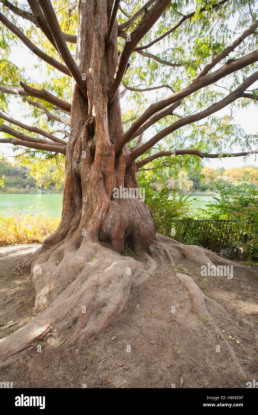 old decrepit knarled tree trunk Stock Photo