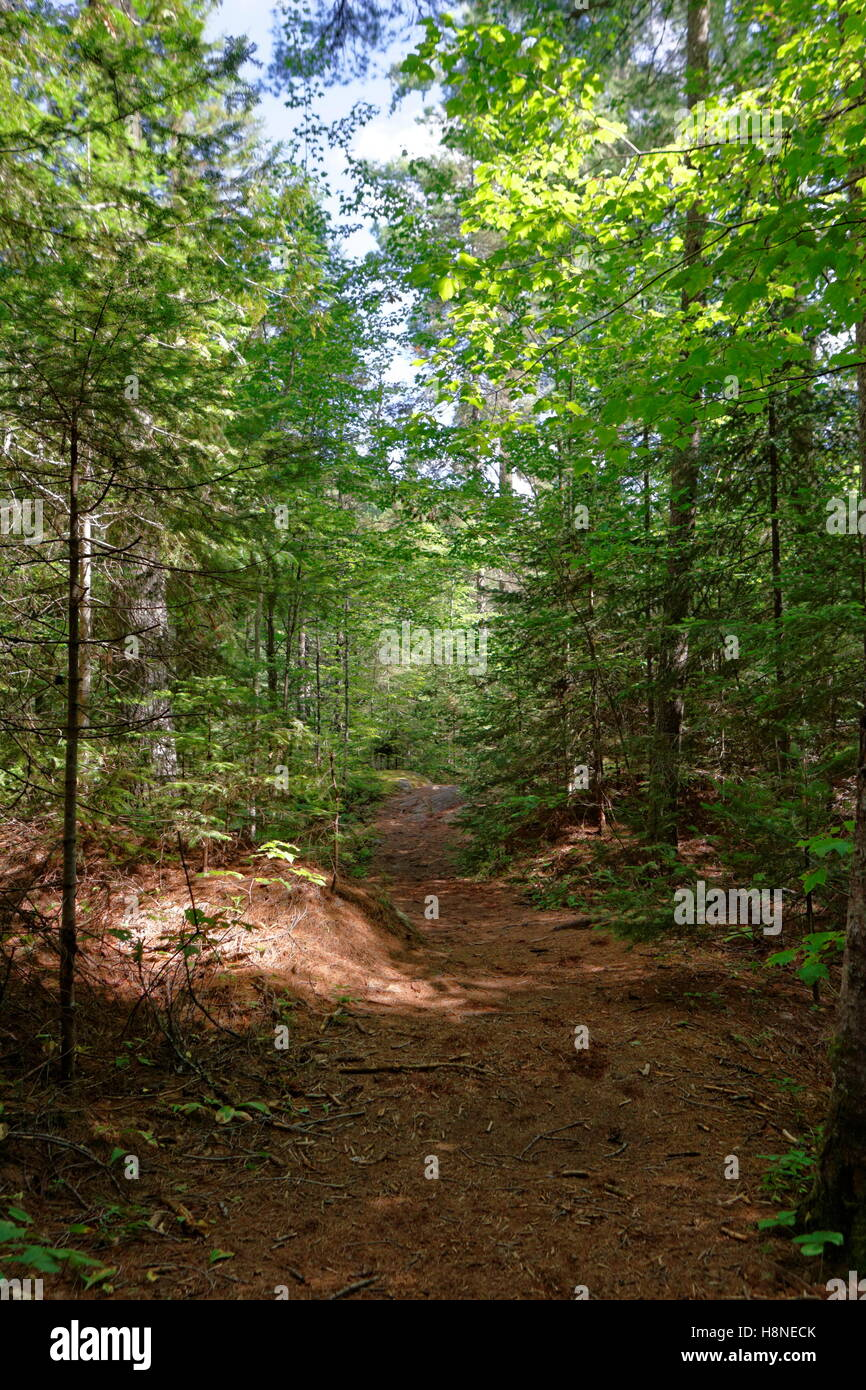 Forest trail - Stock Image
