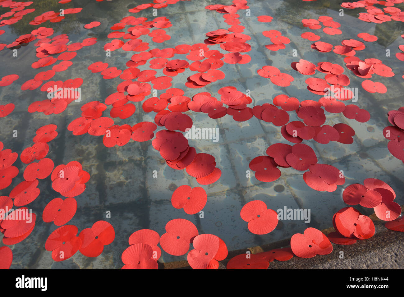Poppies scattered in the fountains,Armistice Day,Silence in the Square,Trafalgar Square,London.UK - Stock Image