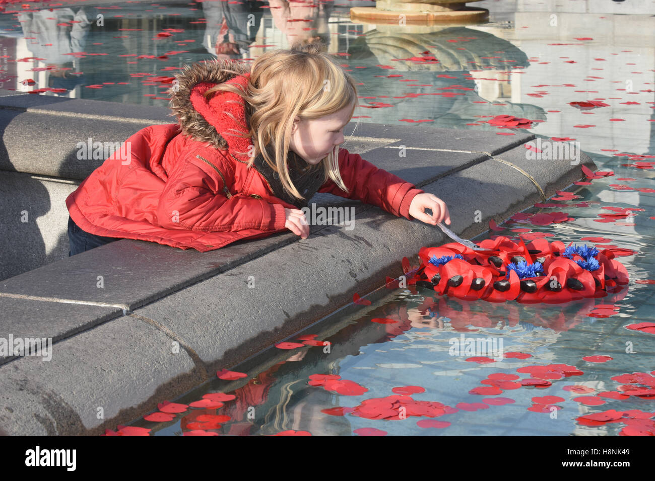 A young girl pushes a poppy wreath into the fountains,Armistice Day,The Royal British Legion,Trafalgar Square,London.UK - Stock Image