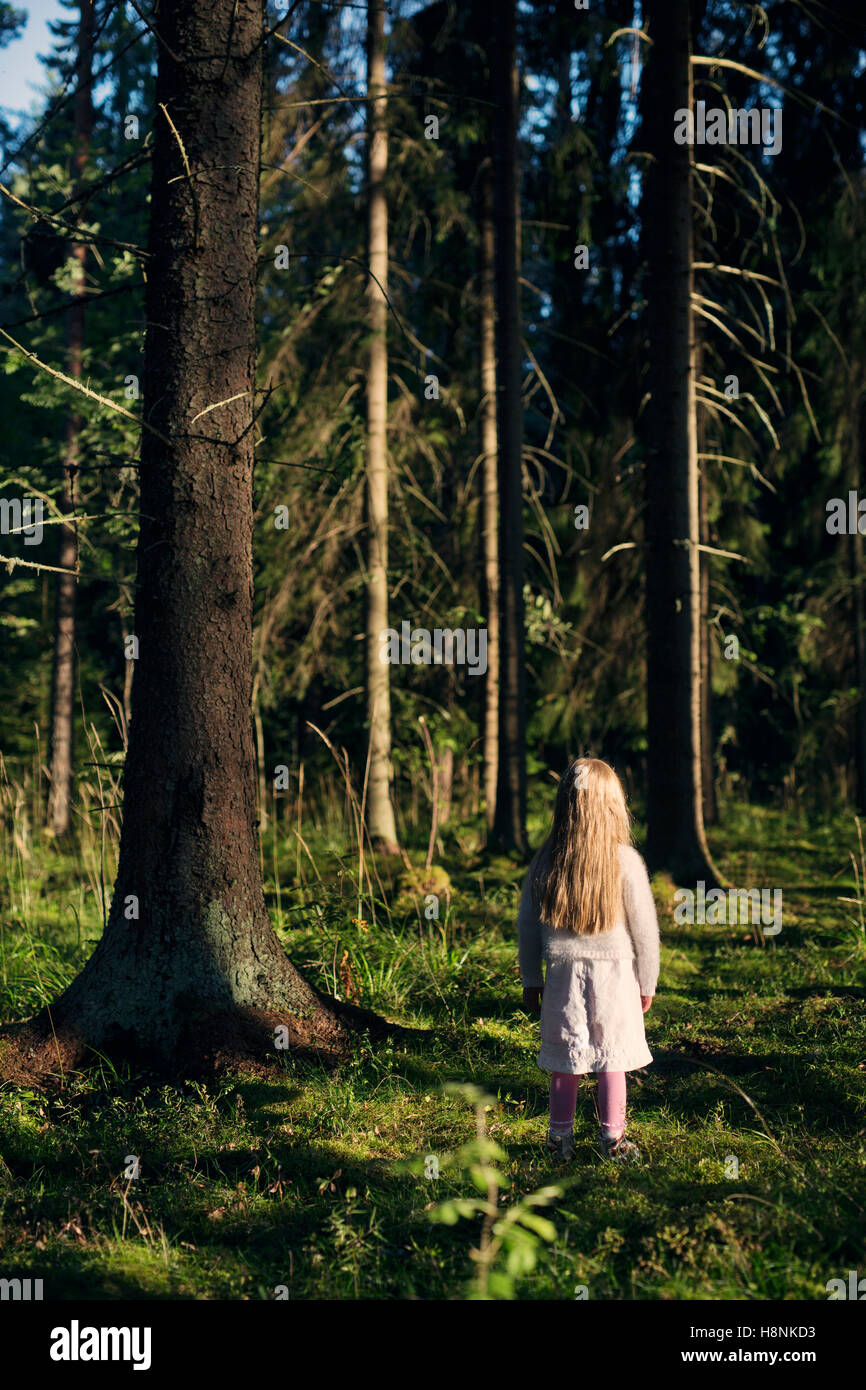 Girl (4-5) standing in spruce forest - Stock Image