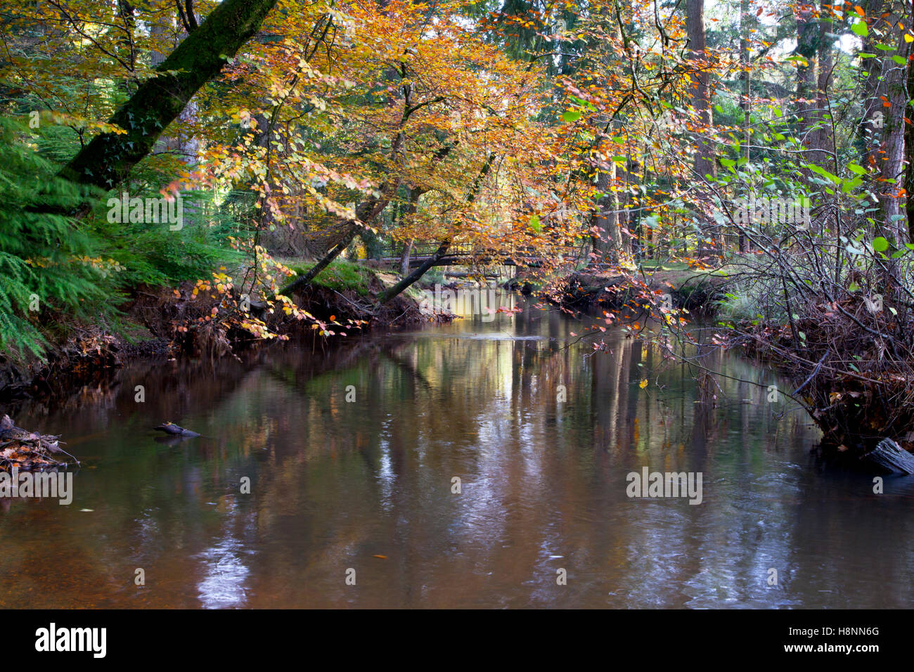 The Black Water stream near the Rhinefield Ornamental Drive in the New Forest, Hampshire, England. - Stock Image