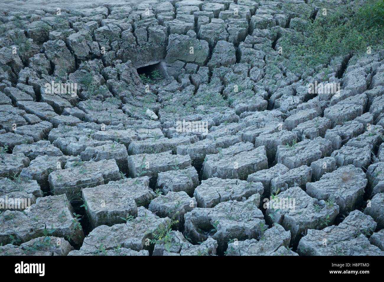 Parched cracked lake bed, Guerledan, France - Stock Image